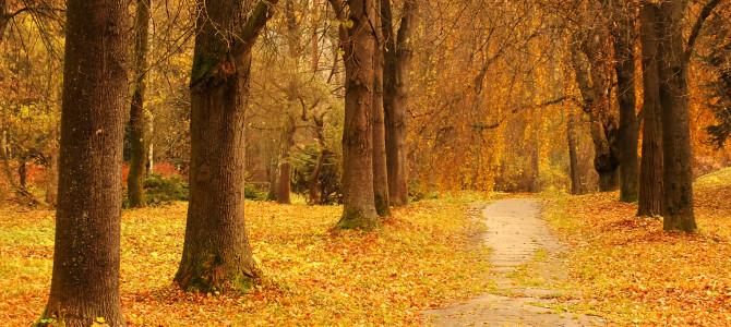 Arborétum v Liptovskom Hrádku